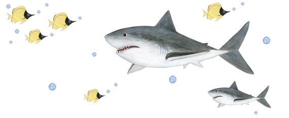 Great White Shark Decals - Layout Sheet