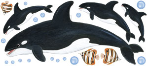 Orca Whale Wall Decals