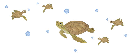 Sea Turtle Wall Decals - Layout Sheet
