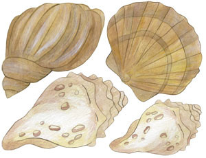 Shell Decal Sheet