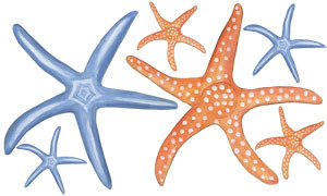 Starfish Wall Decal Sheet