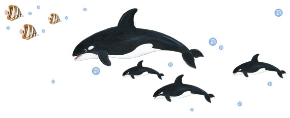 Killer Whale Wall Decals - Layout Sheet